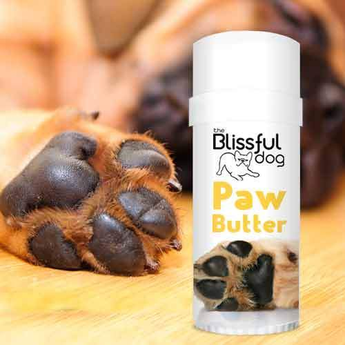 the-blissful-dog-paw-butter-2.25-oz